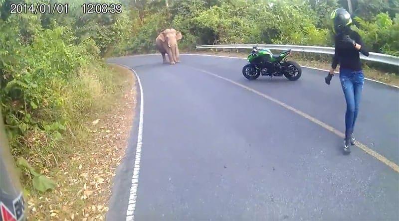 ขี่ขึ้นเขาใหญ่เพลินๆ บังเอิญเจอช้าง วิ่งสิครับ รออัลไร!!! | MOTOWISH 111